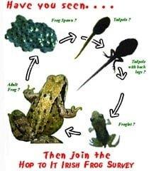 Hop To It Irish Frog Survey