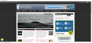 Advertise on Ireland's Wildlife