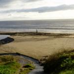 Coastwatch team seeks Citizen Scientists for shore survey
