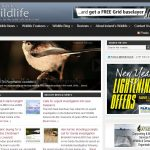 The Ireland's Wildlife Website