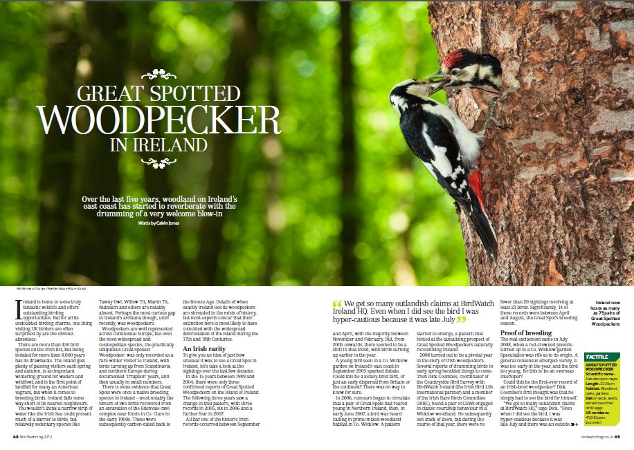 Great Spotted Woodpecker Bird Watching Magazine