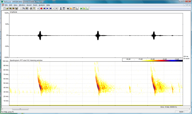 A typical sonogram produced by the Batsound software