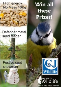 Bird Food Competition