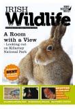 Irish Wildlife