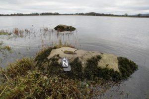 White Tailed Eagle Dead Fermanagh
