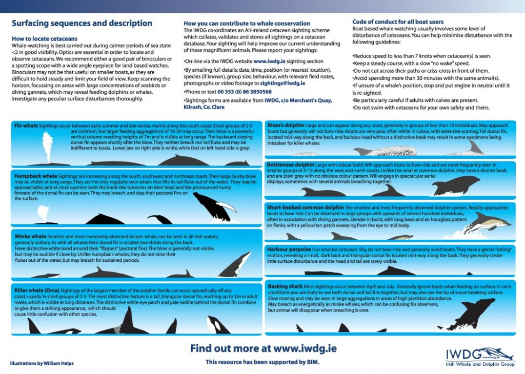 Whale and dolphin surfacing characteristics