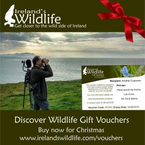 wildlife-gift-voucher Christmas