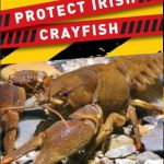 Irish Crayfish Conservation