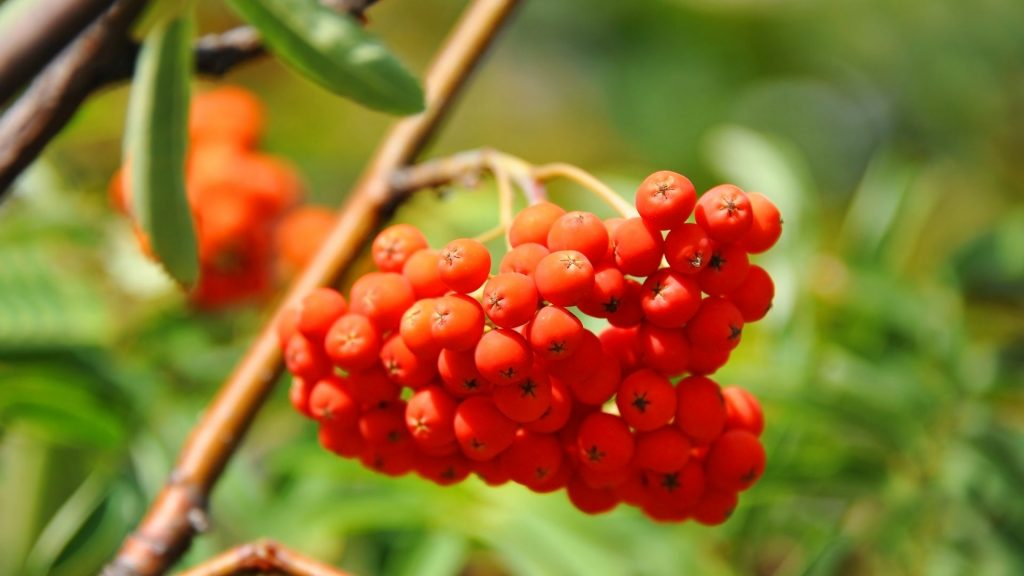 Make your garden more bird-friendly with native berry-bearing trees and shrubs.
