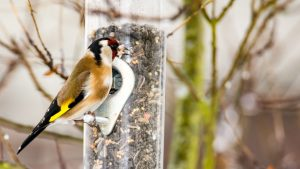 Bird feeders are perhaps the best way to attract more birds to your garden.
