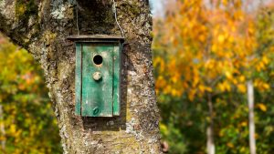 Nesting boxes make gardens more bird friendly