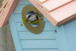 Is it OK to paint or treat your nest box?